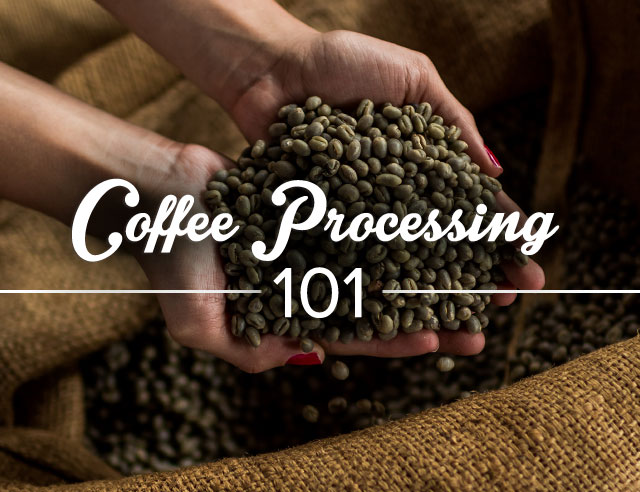 Coffee Processing 101