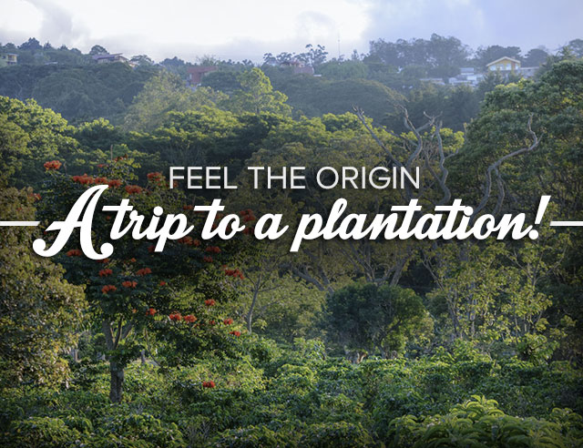 feel-the-origin-a-trip-to-a-plantation