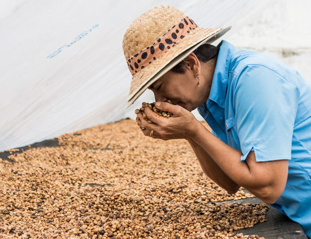 Doña Cecilia with coffee in the drying stage