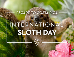 Escape to Costa Rica: International Sloth Day