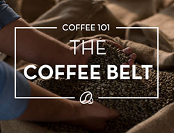 Coffee 101: Coffee Belt