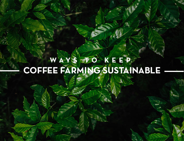 Ways to Keep Coffee Farming Sustainable