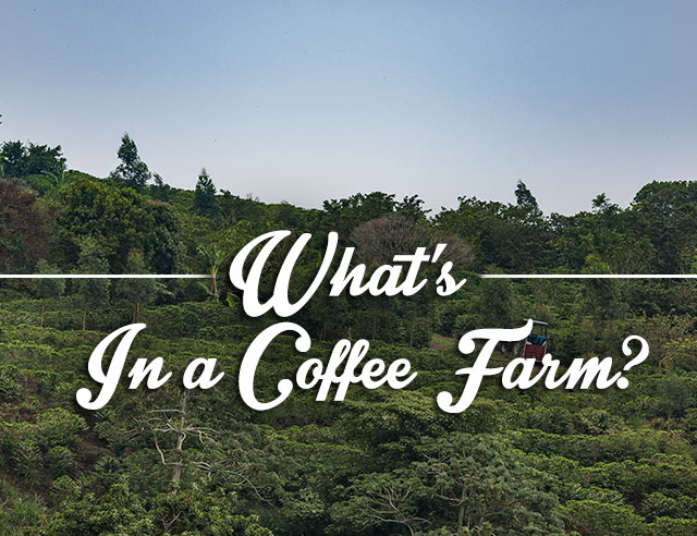 What's a Coffee Farm