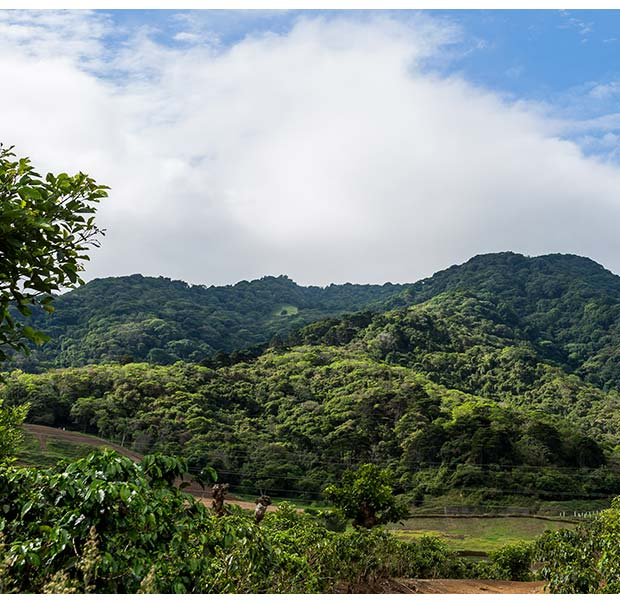 Coffee plantation in Tres Ríos
