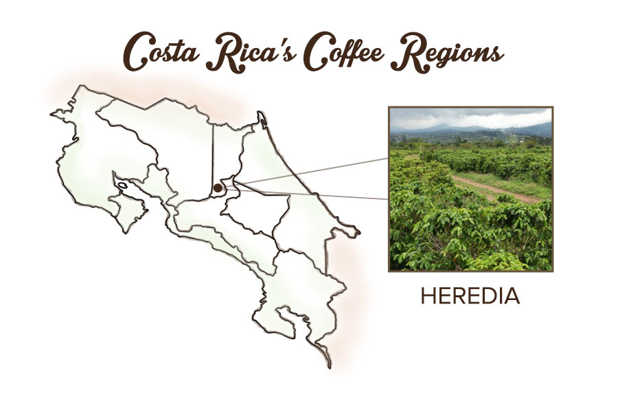 Costa rican medium roast heredia from cafe britt - Costa coffee head office telephone number ...