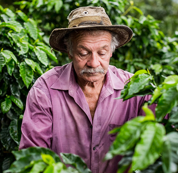 Our coffee producer Don Eliecer