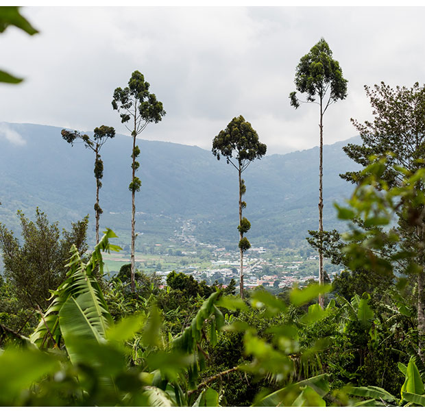 View from one of our producer's coffee plantation