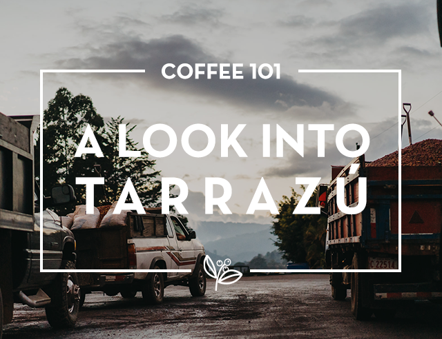 A look into the Tarrazú Coffee Region