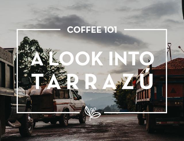 A look into the Tarrazú Coffee Region
