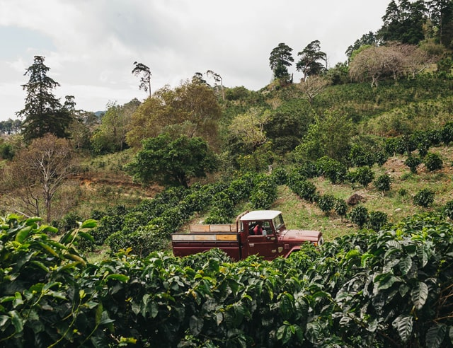 Red pick-up truck in coffee plantation