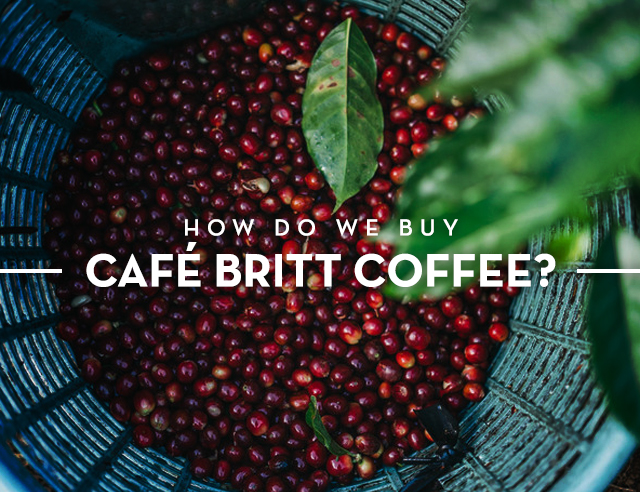 Title card for blog post How do we buy Britt coffee