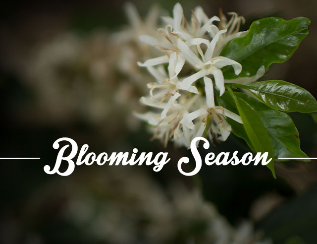 Blooming Season