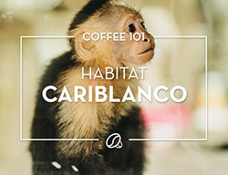 Coffee 101: Habitat Cariblanco