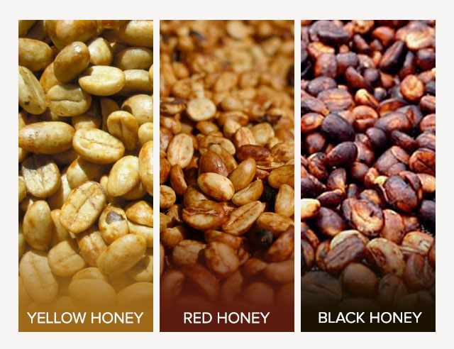 Three types of honey processed coffee beans