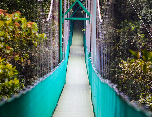 Monteverde Suspension Bridge in Costa Rica