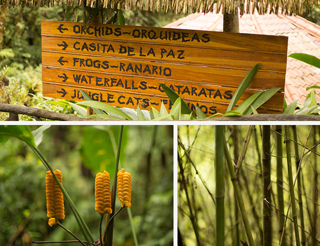 Tropical flower, rustic sign, and bamboo