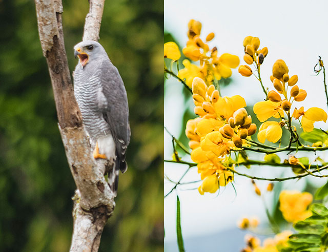 Bird and yellow flower