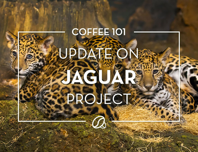 Update on Jaguar Project