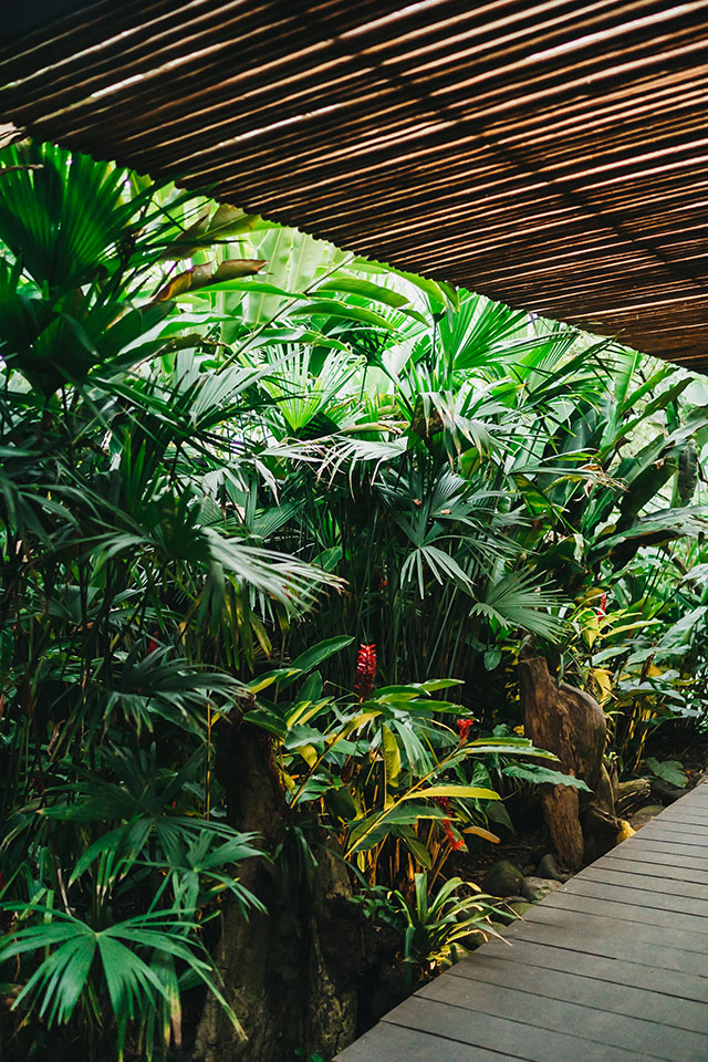 Patio with tall tropical plants