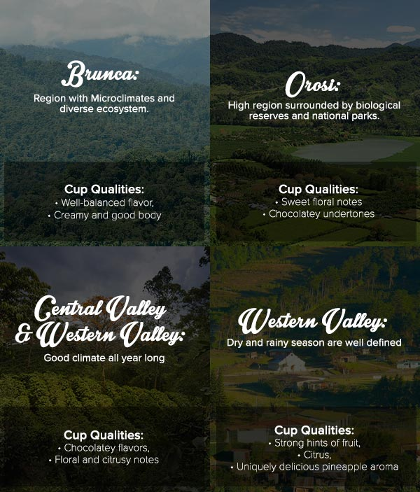 Infographic about Merito Cosecha de Mujer coffee by Cafe Britt