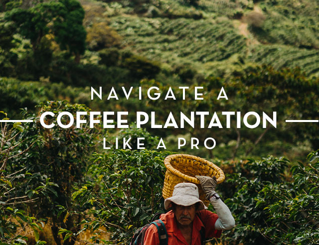 Navigate a Coffee Plantation