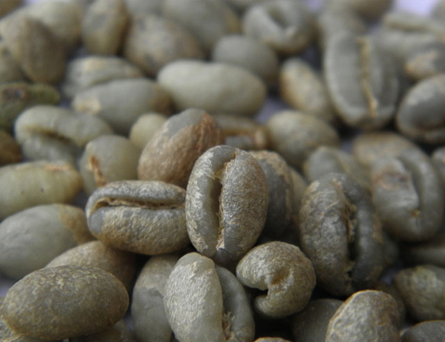 Green peaberry coffees