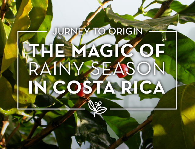 Rainy Season in Costa Rica