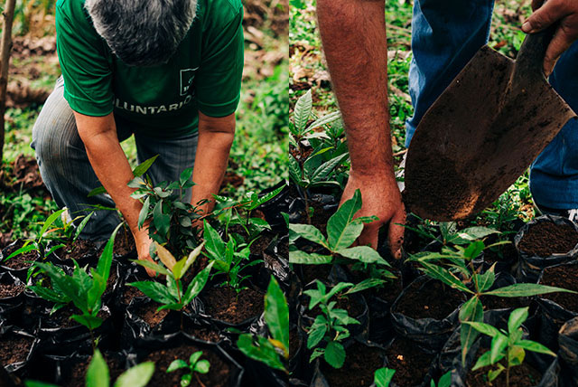 Planting trees in Costa Rica with Café Britt volunteers