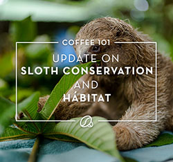 Coffee 101: Update on sloth conservation Habitat