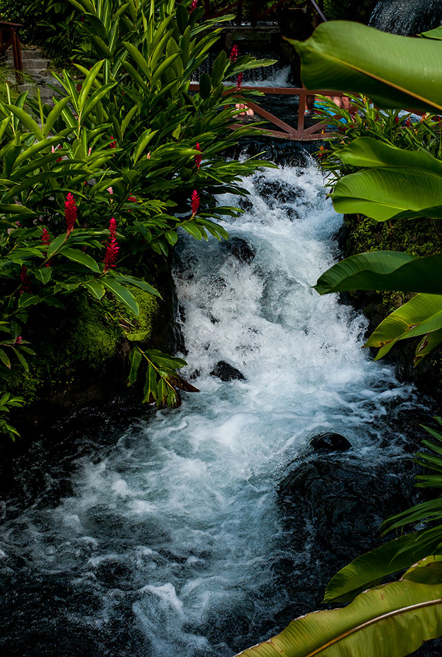 Bromelias and rushing water with small bridge