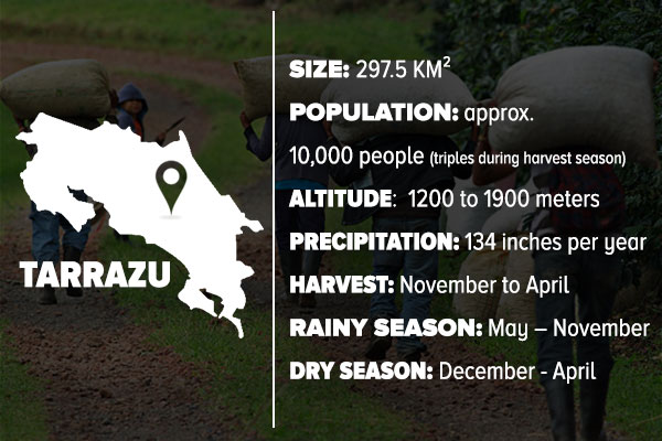 Infographic on Tarrazu, Costa Rica