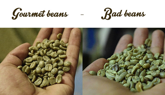 Infographic of gourmet green coffee beans versus bad beans