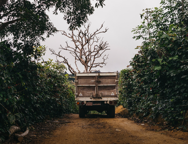 Coffee plantation, men putting coffee in a truck, and coffee processing mill