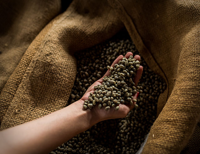 Person handling green coffee beans