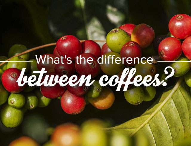 What's the Difference Between Coffees