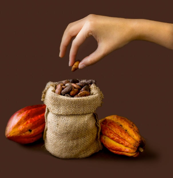 Cocoa bean and cocoa fruits