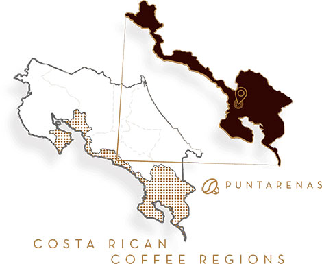 7-provincias-puntarenas-whole-bean